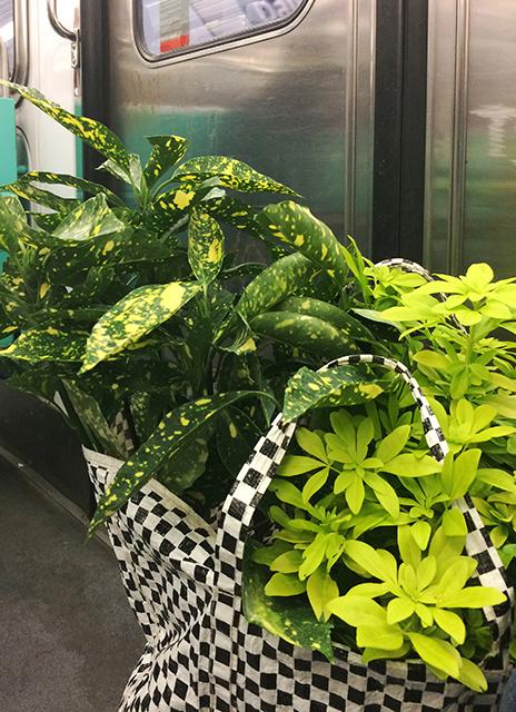 Mary-Etcetera- Styliste déco, photo, DIY sur Instagram - Plants lovers